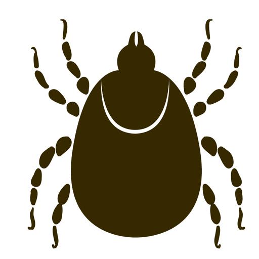 Krätze am Anfang Logo_Bild_Krätzmilbe schwarz-rot